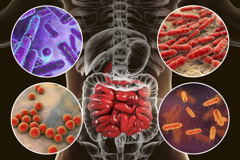 Intestinal microbiome, bacteria colonizing small intestine