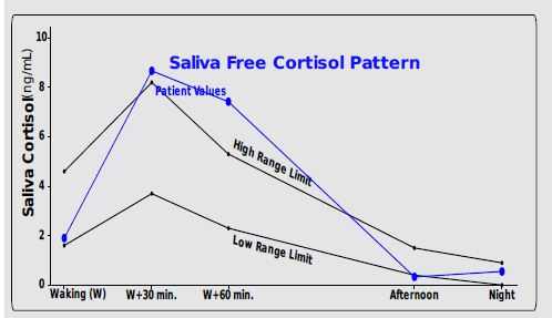The cortisol graph - the cortisol stress connection blog post