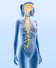 The vagus nerve: Why it's so important And 7 Ways To Strengthen It